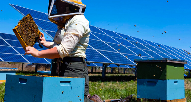 Eco-Friendly Cost-Saving Opportunities for Alberta Beekeepers – Energy-Efficient Beekeeping
