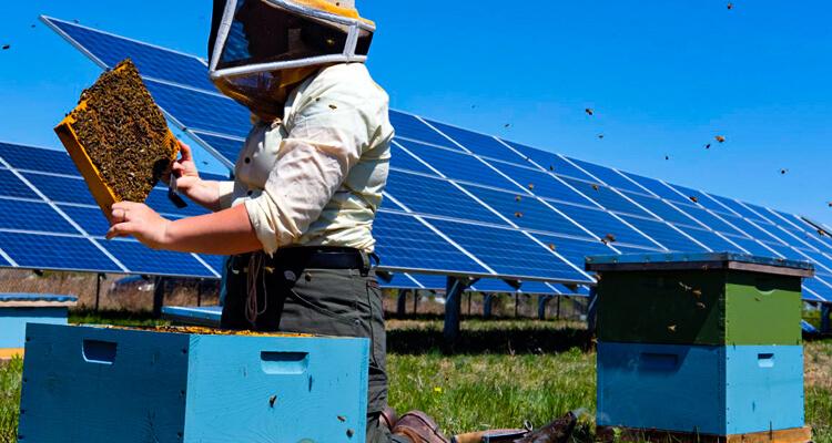 Eco-Friendly Cost-Saving Opportunities for Alberta Beekeepers – Energy-Efficient Beekeeping